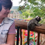 MArmoset at Monkeybirds in Hazyview interacting with visitors