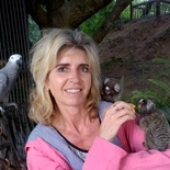 Wnnie Human from Monkeybirds with African Grey and pair of Marmosets - photographer Basie Human