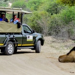 Photographic oppertunities in capturing predators in the Kruger National Park near Nabana Lodge