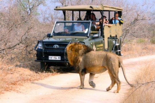 Game drive with collection from Nabana Lodge to Kruger National Park