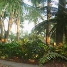 Late afternoon light in Subtropical Gardens at Nabana Lodge
