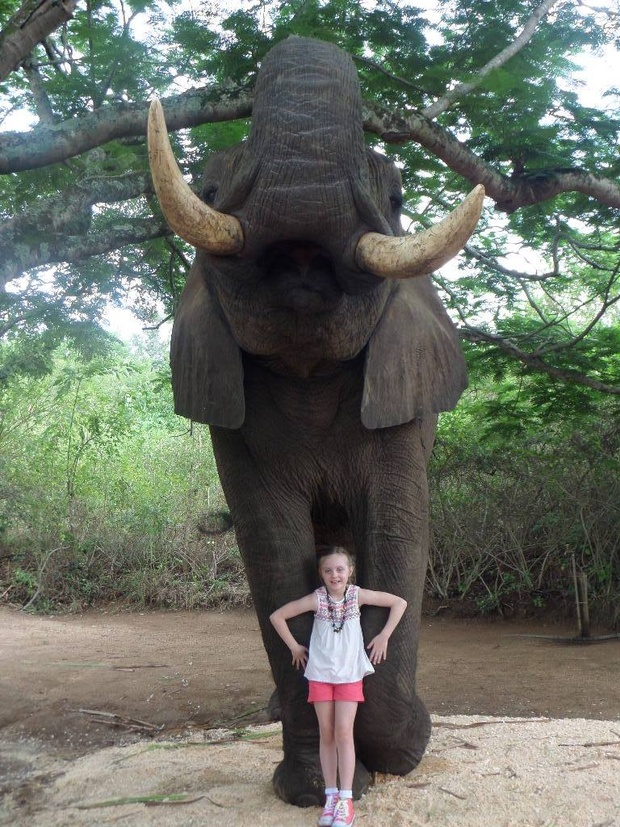 Close encounter between young girl and elephant